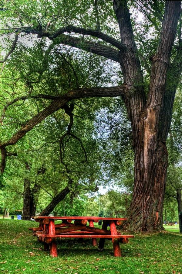 Baum pflanzen, um Energie zu sparen