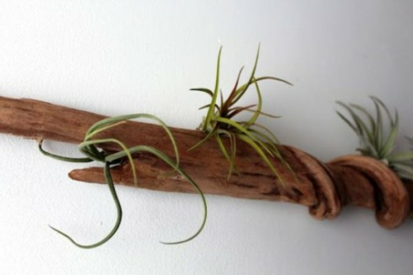 treibholz an der wand grüne pflanzen