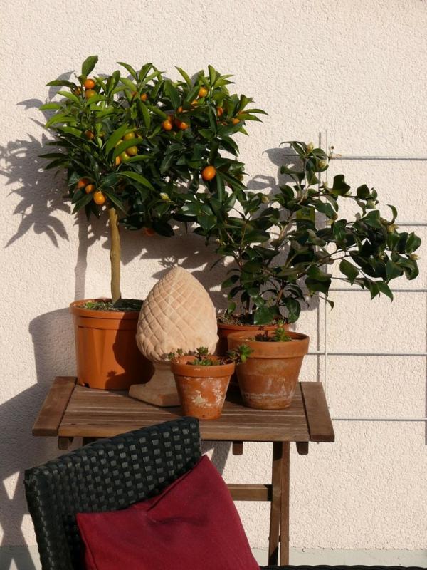 mediterrane terrasse mit lemon bäumen