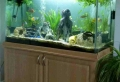 Aquarium Schrank – schaffen Sie eine exotische Atmosphäre zu Hause!