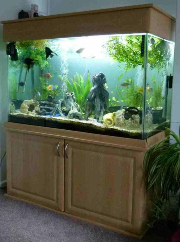 aquarium-mit-einem-schrank- in der ecke