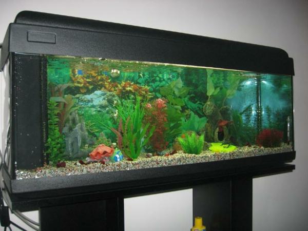 Aquarium Schrank Groß Modern  Mit Schwarzer Farbe Gestaltet