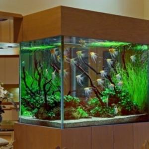 Aquarium Schrank - schaffen Sie eine exotische Atmosphäre zu Hause!