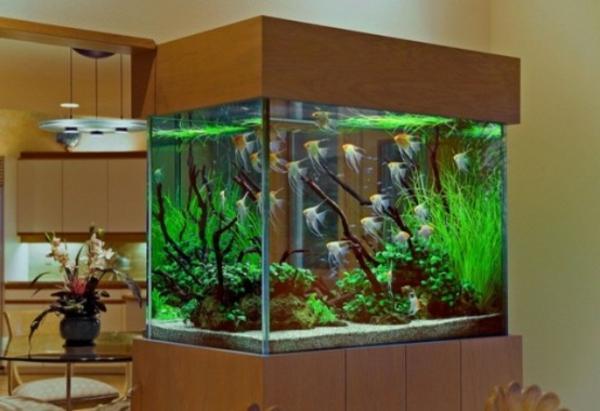 Aquarium schrank schaffen sie eine exotische atmosph re for Aquarium einrichtungsideen