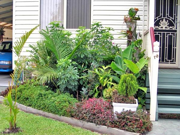 grüne-pflanzen-vorgarten - wunderschön aussehen