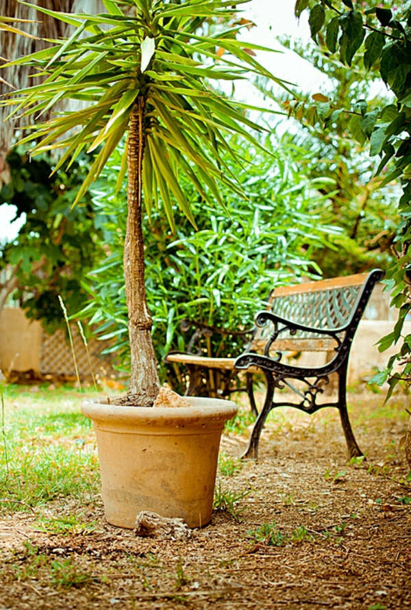 mediteranner-garten-palme-topf- klein und grün