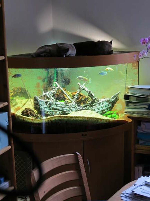 meerwasseraquarium-kaufen- zwei katzen liegen darauf