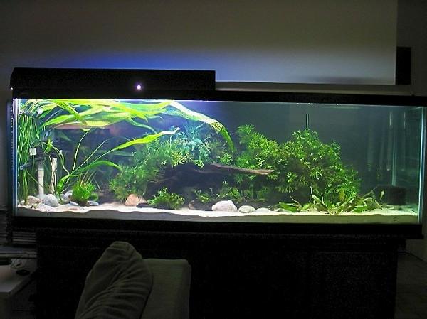 meerwasseraquarium mit einem schrank im dunklen zimmer
