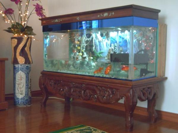 salzwasser-aquarium-aristokratischer look