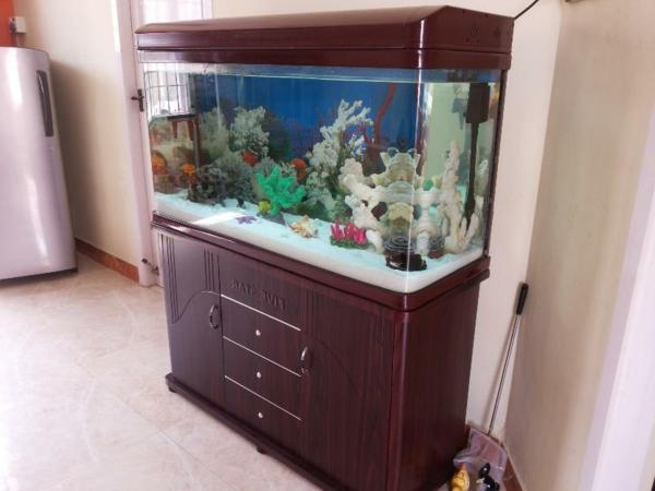 salzwasser-im-modernen-aqarium- mit einem hohen holzschrank