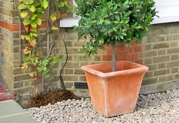 vorgarten-mit-topfpflanzen-gestalten - kreative idee
