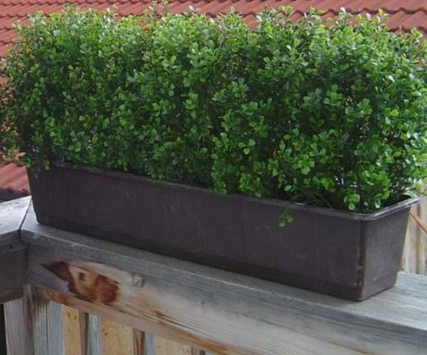 balkonverkleidung -grüne-topfpflanze-gemütliches-ambiente-auf-der-terrasse