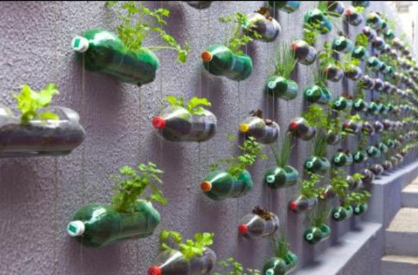 blumentöpfe-selber-machen-in-flaschen-an-die-wand-aufhängen - interessanter vorschlag