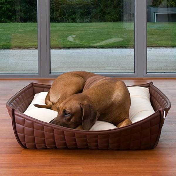 braunes-orthopädisches-hundebett-mit-weißer-matte - brauner hund