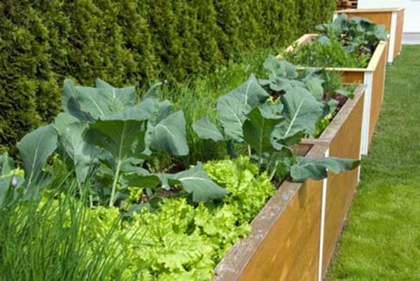hochbeet-anlegen - grüne pflanzen und büschen