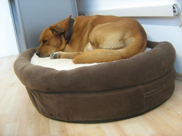hundebett-orthopädisch-braun - grosse hunderasse