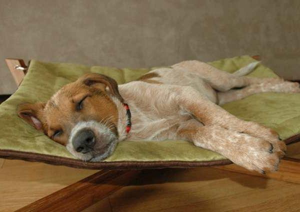 orthopädisches hundebett - ein hund schläft darauf - niedlich
