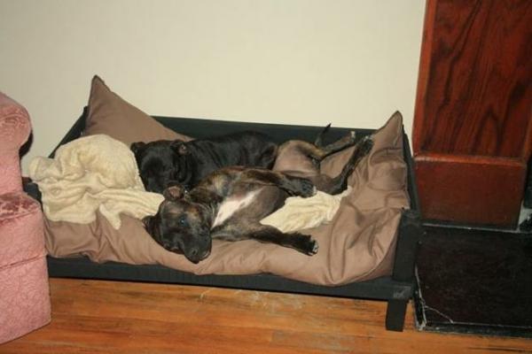 hundebettchen-für-zwei-hunde - taupe farbe matte