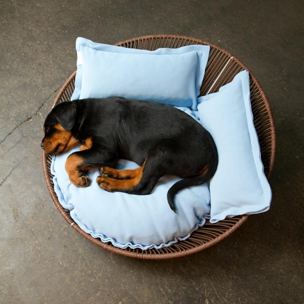 hundebettchen-orthopädisch-hell-blau - kleiner schwarzer hund