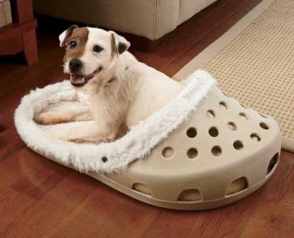 hundebettchen-orthopädisch-in-der-form-von-einer-schuh - süße hunderasse