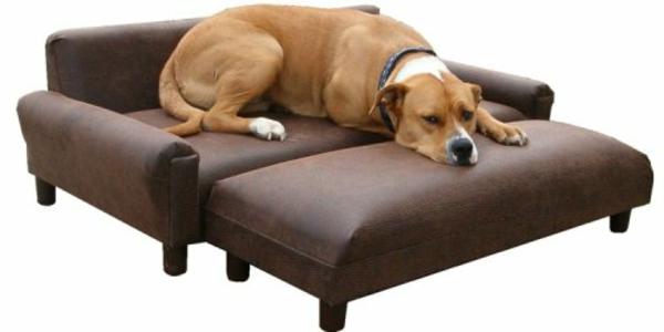 hundebetten-für-große-hunde-orthopädisch - hintergrund in weiß
