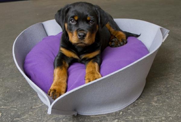 hundebetten-orthopädisch-lila - schwarzer kleiner hund