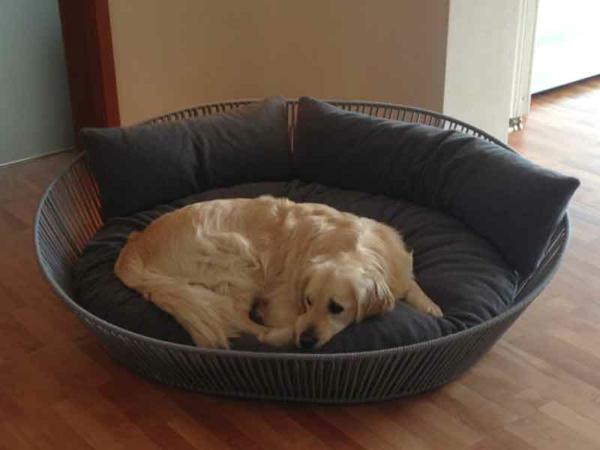 hundebetten-orthopädisch-mit-kissen - beige hund
