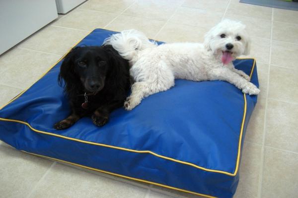hundematte-orthopädisch-blaue-farbe - schwarzer hund und weißer hund