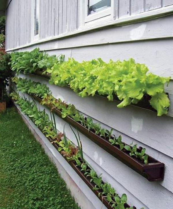 ideen-gartengestaltung-grüne-pflanzen - dekoration für garten