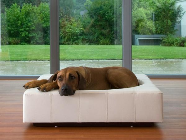 luxuriöses-orthopädisches-hundebett-xxl-weiß - eine gläserne wand dahinter