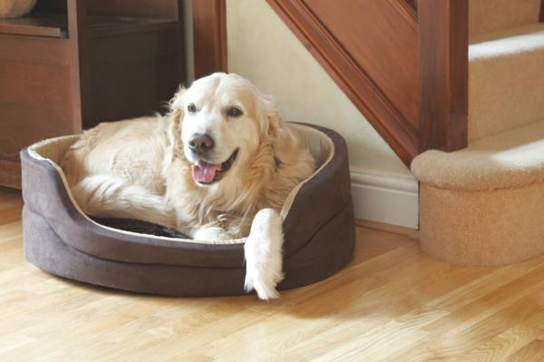 moderne-orthopädische-hundebetten-für-große-hunde - treppen daneben