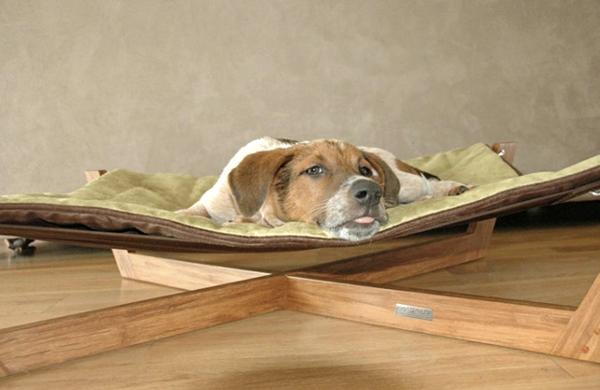 modernes-othopädisches-hundebett - niedlicher hund liegt darauf