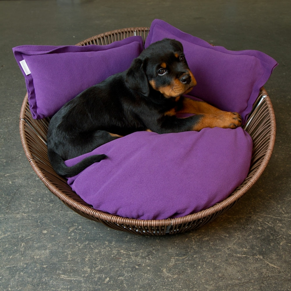 orthopädische-hundebetten-lila-farbe - schwarze kleine hunderasse