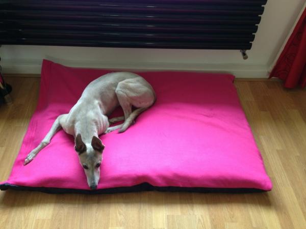 orthopädische-hundekissen-xxl-zyklamenfarbe - großer hund