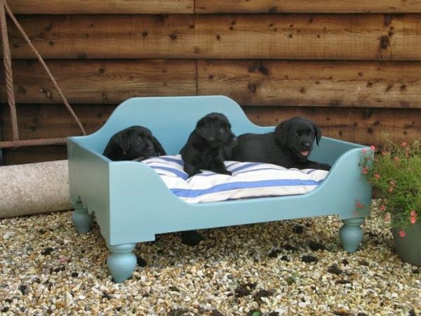 orthopädisches-hundebett-blaue-farbe - drei kleine hunde in schwarz