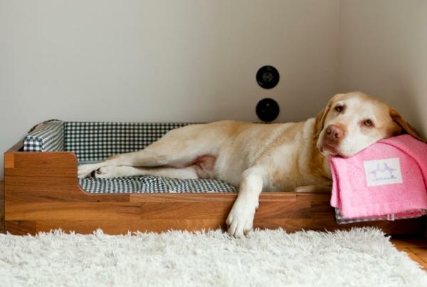 orthopädisches-hundebett-großer-hund - darauf