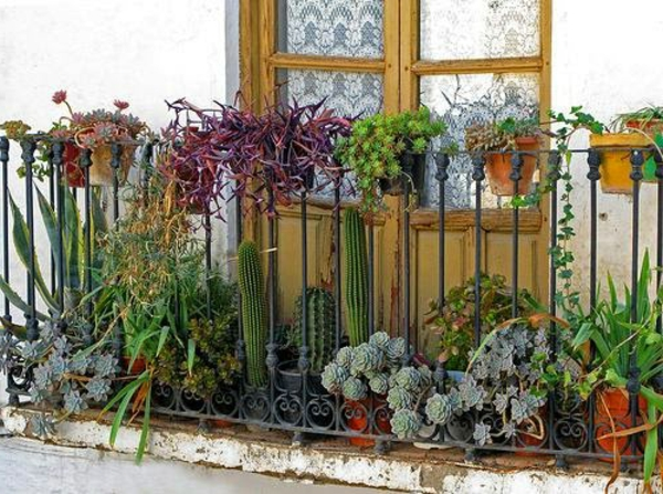 seitensichtschutz-für-balkon- blumen-dekoration-kakteen