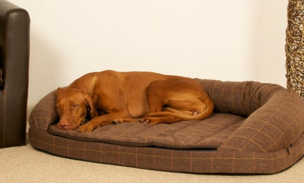 xxl-hundebett-braune-farbe - großer brauner hund