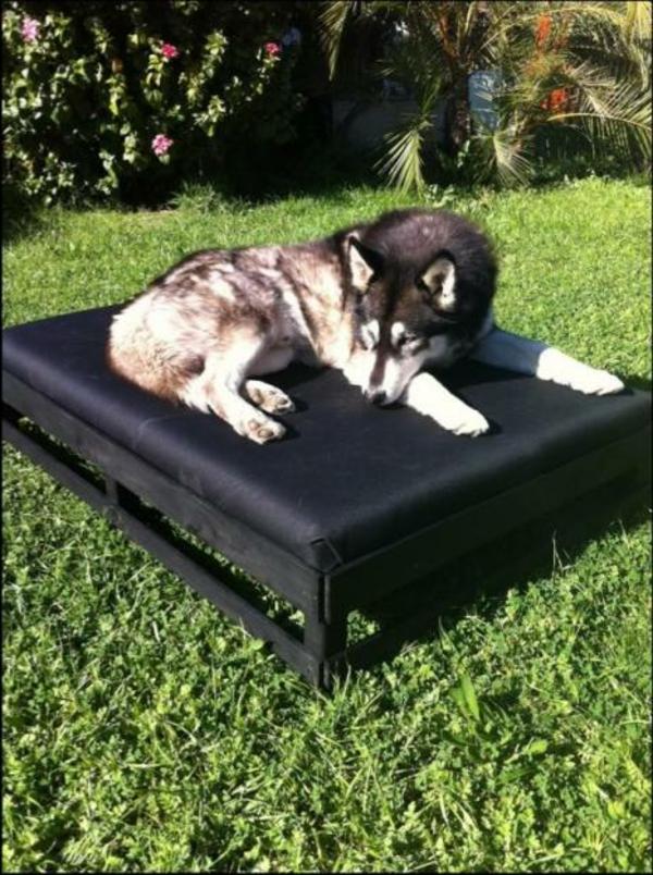 xxl-hundebett-draußen-stellen - großer hund liegt darauf