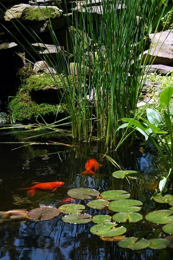 gartenteich-mit-orangen-fischen