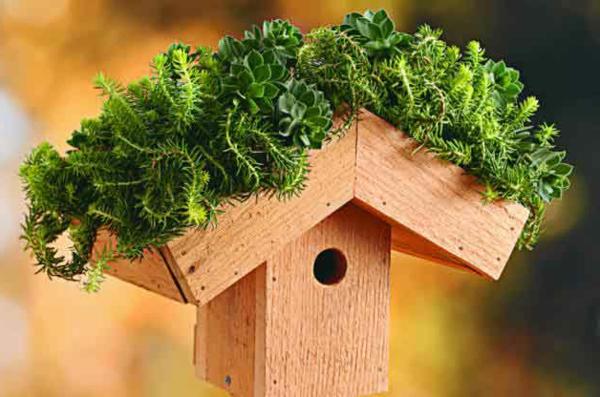 grünes-dach-vogelhaus-selber-bauen-grüne bepflanzung
