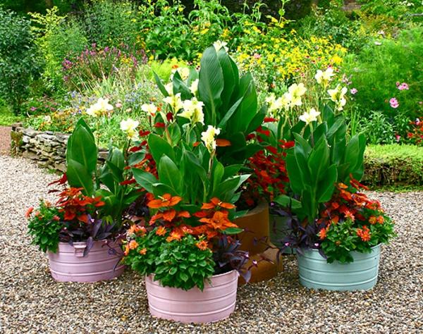 schöne-pflanzen-für-den-garten