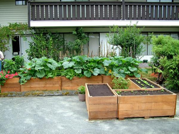 viele-grüne-pflanzen-einmalig erscheinen
