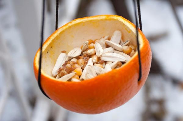 vogelhaus-aus-orange-machen-eine verblüffende idee