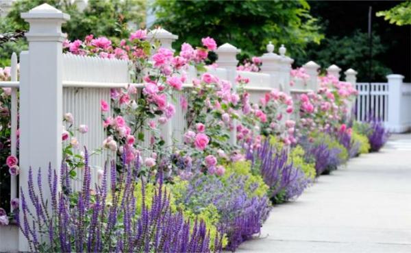 weißer-zaun-und-viele-blumen- rosa und lila