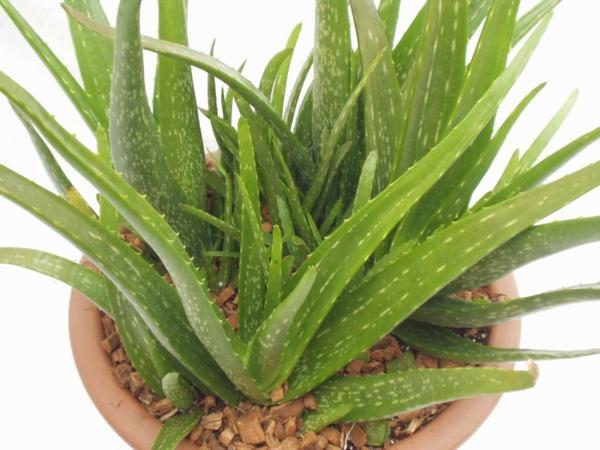 Exotische zimmerpflanzen tolle ideen f r ihre wohnung for Zimmerpflanzen trend