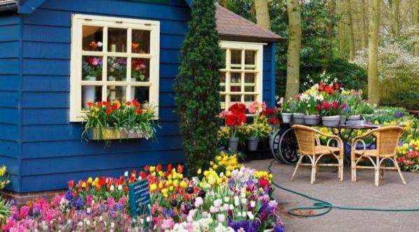 Gartenhaus-Gartenschuppen-bunte-blumen-im-garten-arrangieren