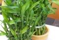 Pflegeleichte Zimmerpflanzen – 18 Vorschläge!