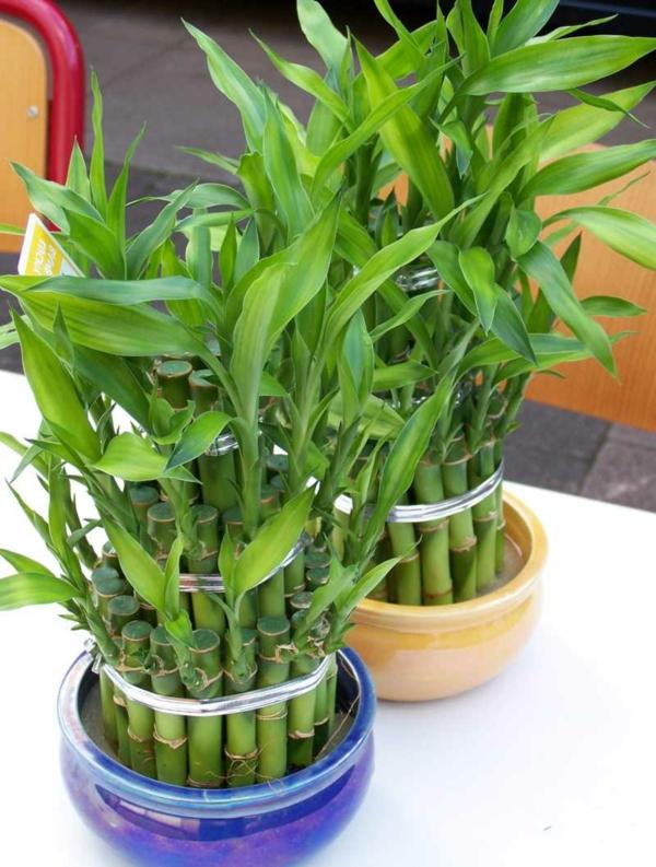 Pflegeleichte zimmerpflanzen 18 vorschl ge - Plantas bonitas de interior ...