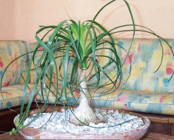 wunderschöne grüne pflanze auf dem nesttisch im wohnzimmer